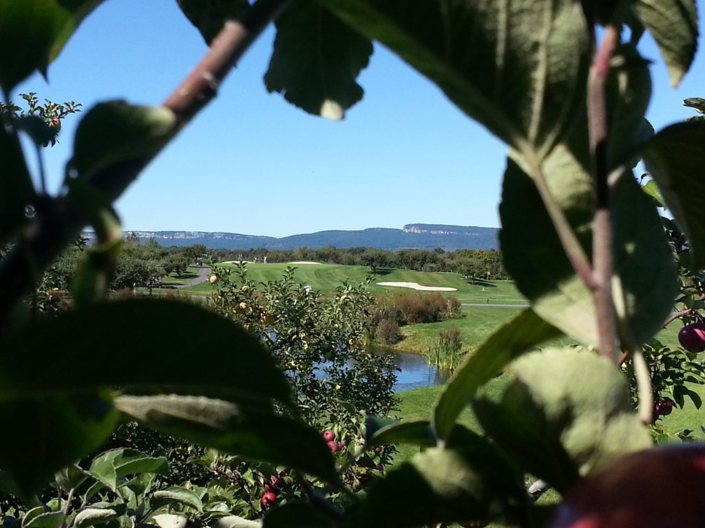 looking through an apple tree overlooking Apple Greens Golf Course
